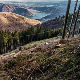 «Troppi pini abbattuti sul Bisbino  Vogliamo chiarezza sui lavori»