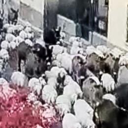 Via le auto, arriva il gregge  A Trecallo centinaia di pecore