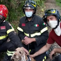 Pellio, cane salvato dai pompieri  Rischiava di cadere nel torrente