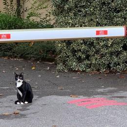 Cantù, il divieto in ospedale  «Non date più cibo ai gatti»