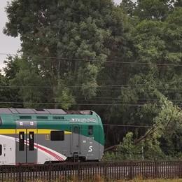 Pianta finisce sui binari  Treno bloccato a Grandate