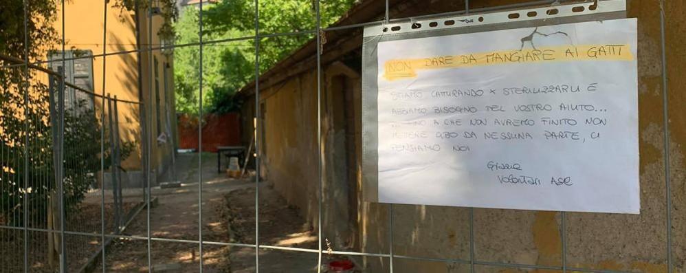 """Ponte Lambro, la guerra dei gattari  Volontari contestati dagli """"Amici"""""""