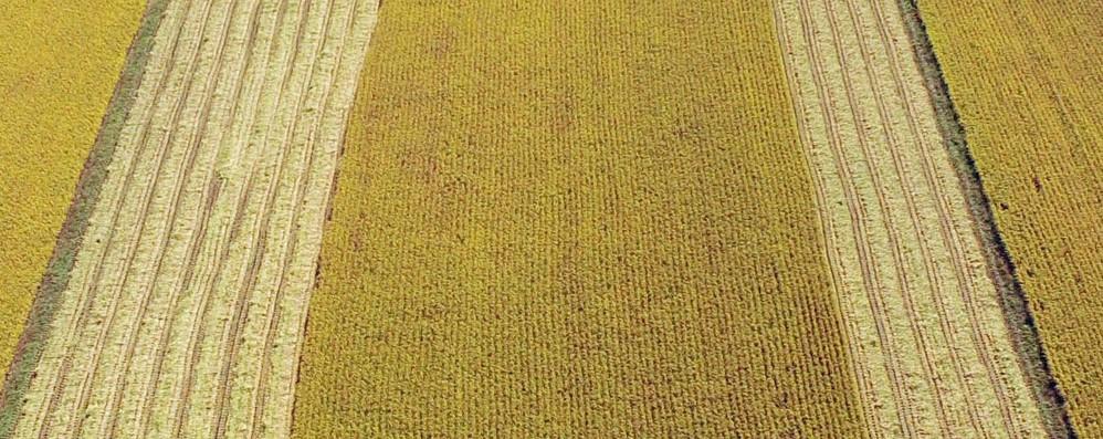 Bruxelles presenterà una strategia di sostegno 'ad hoc' per le aree rurali