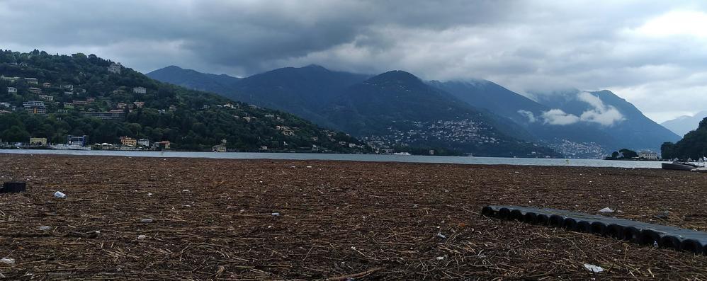 Como, il lago invaso  dai detriti VIDEO