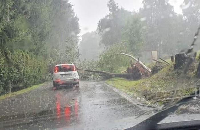 Albero caduto sulla provinciale di pian delle Noci a Lanzo