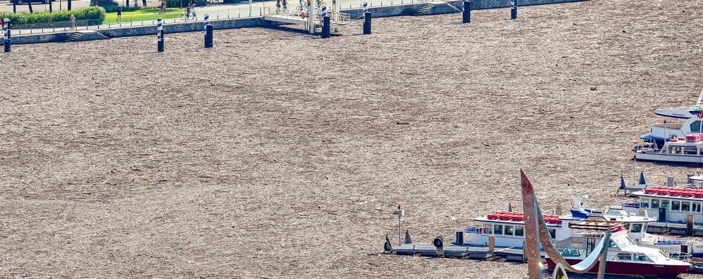 Como: il lago è scomparso  «Impossibile dire quando si rivedrà»