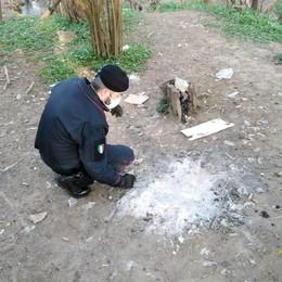 Inverigo, trovata droga nel bosco  Sequestrati etti di eroina e hashish