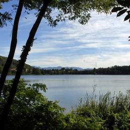 Montorfano, piano per far respirare il lago  Taglio del canneto e nuove piante